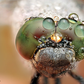 Green eyes by Ondrej Pakan (biker11)) on 500px.com