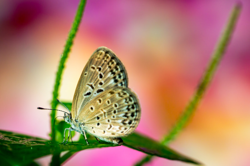 Photograph butterfly by Te Montri on 500px