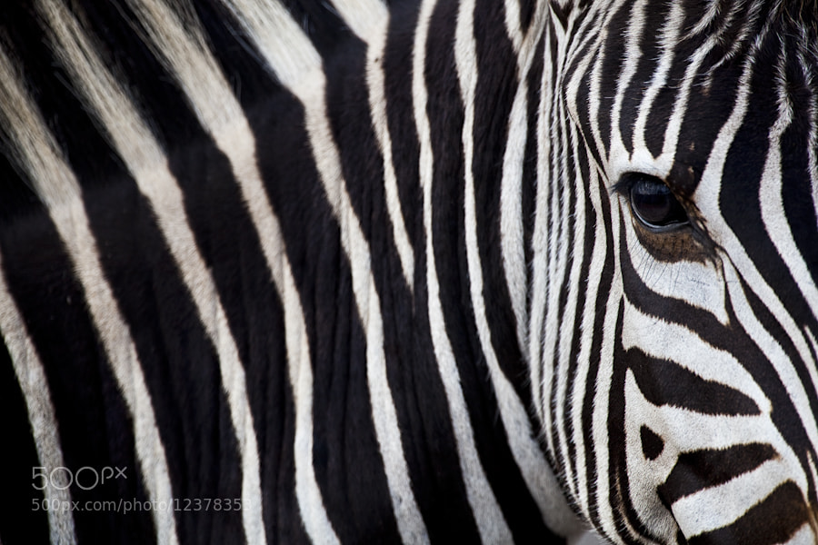 Photograph Stripes by Mario Moreno on 500px