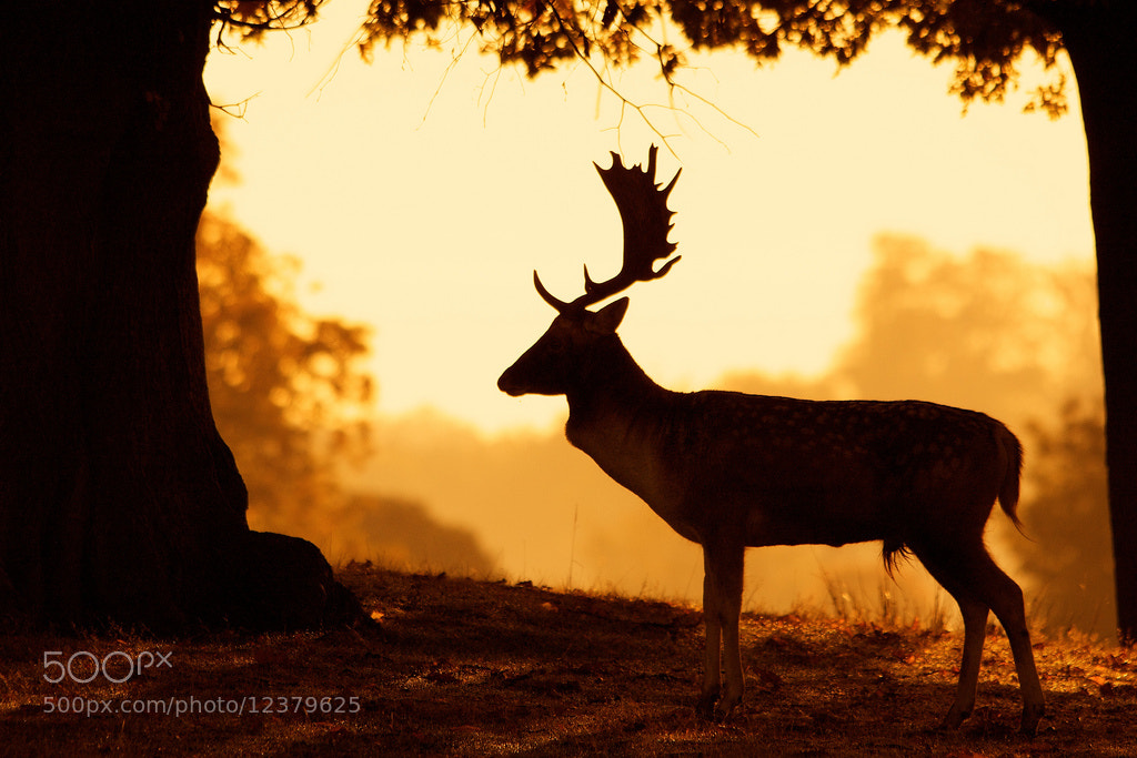 Photograph silhouette by Mark Bridger on 500px