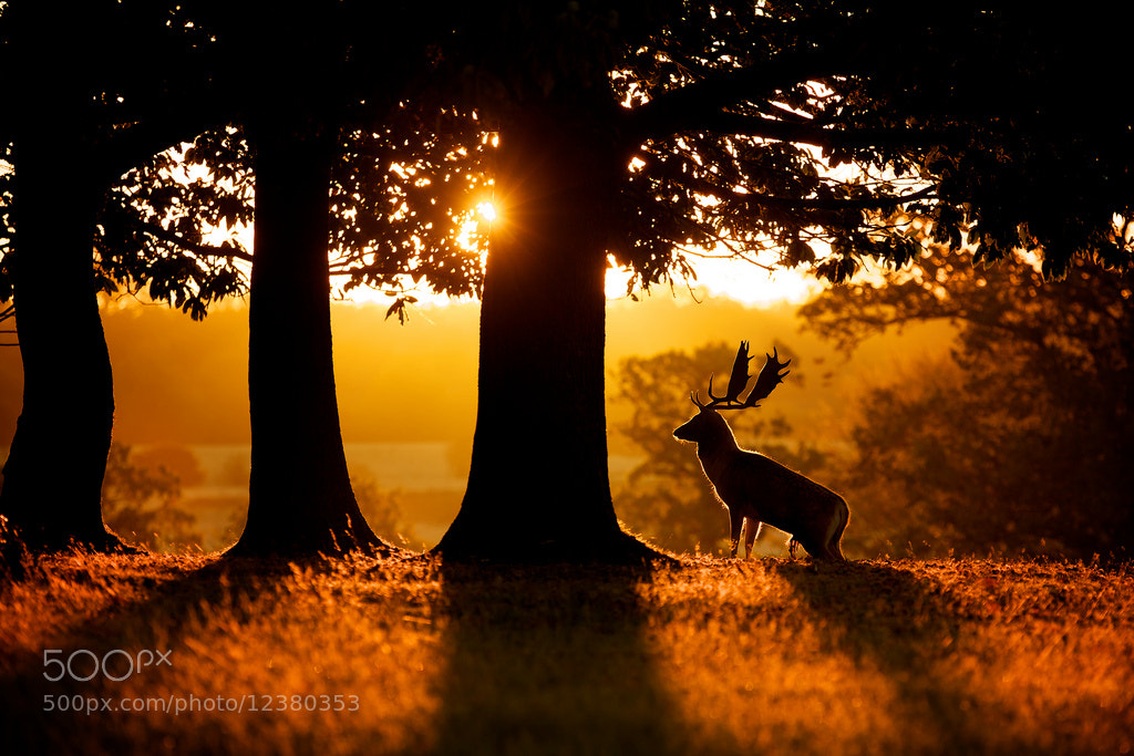 Photograph sunrise by Mark Bridger on 500px