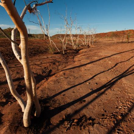 Long Shadows of Dead Trees, Tennant Creek, Australia