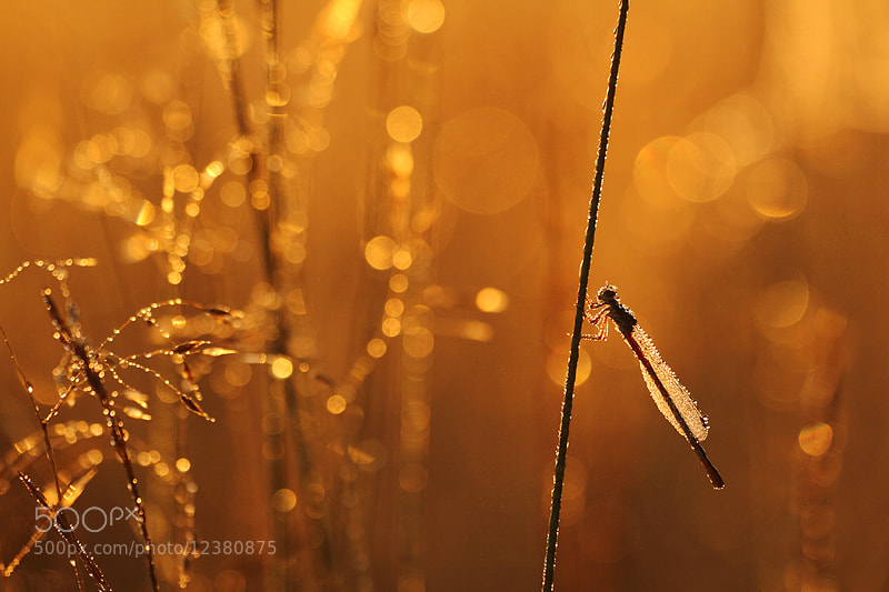 Photograph The golden light by Johannes van Donge on 500px