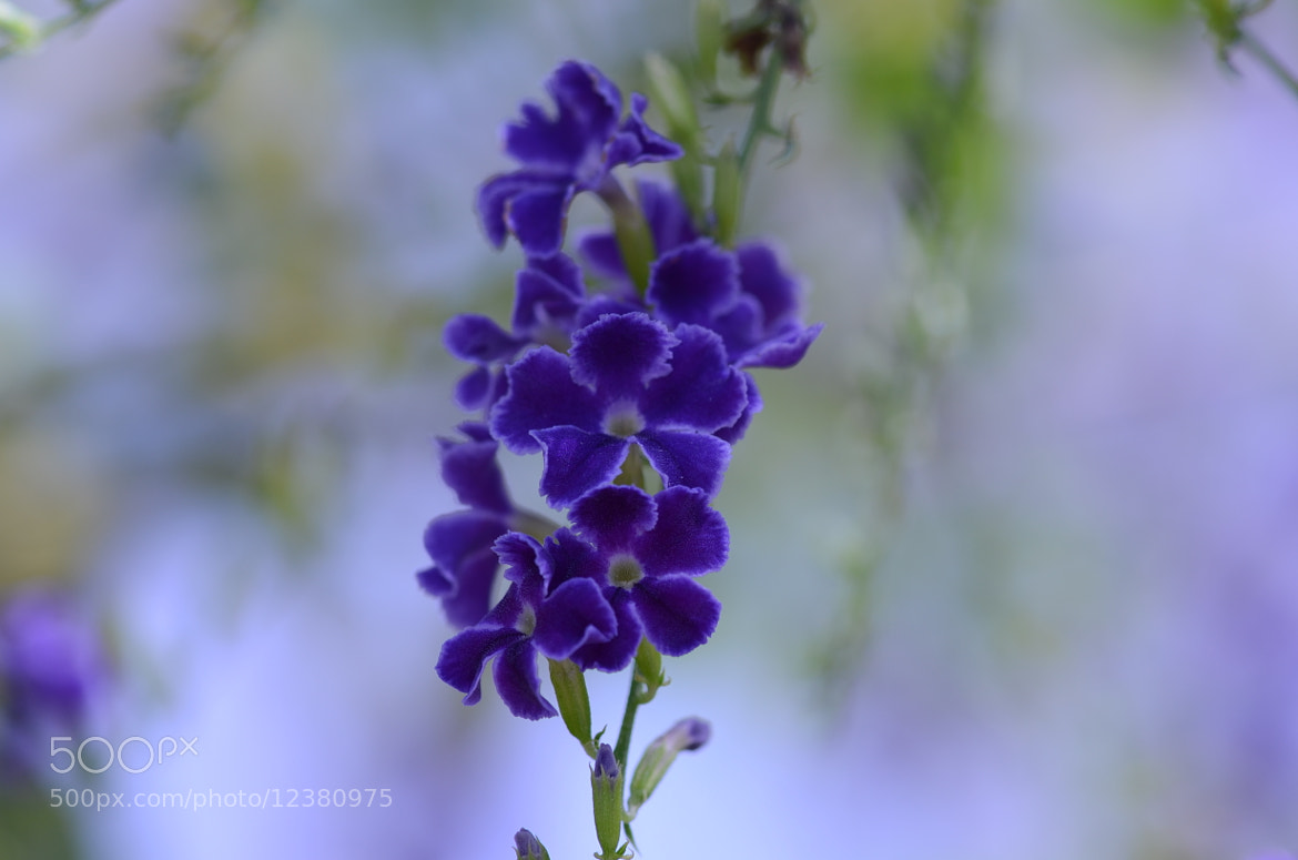 Photograph a purple branch by Liora Levin on 500px