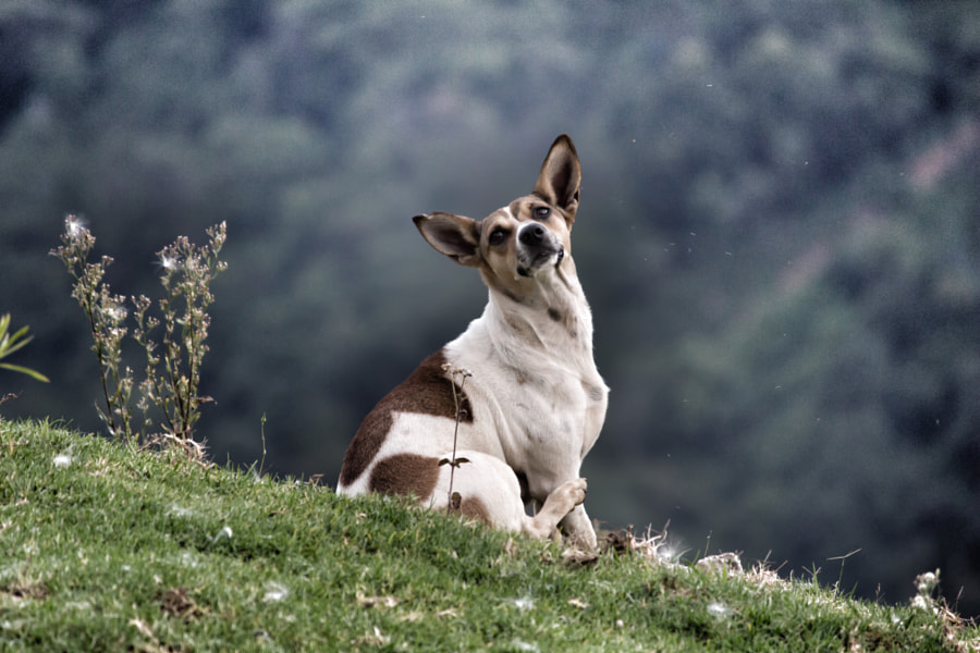 The Hill Dog at Coonoor, India by Vivek Pandey on 500px.com