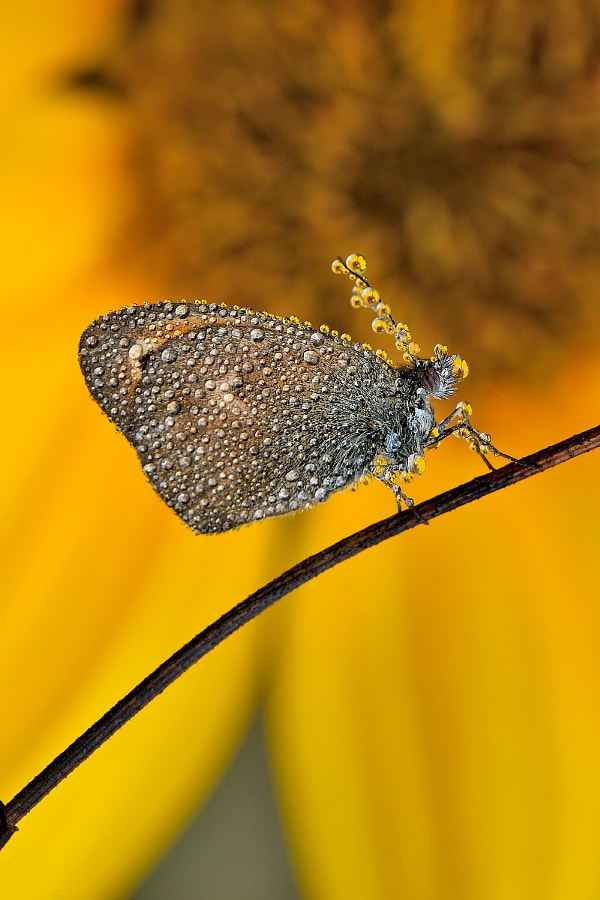 Sunrise with butterfly by Tiziano Pieroni on 500px.com