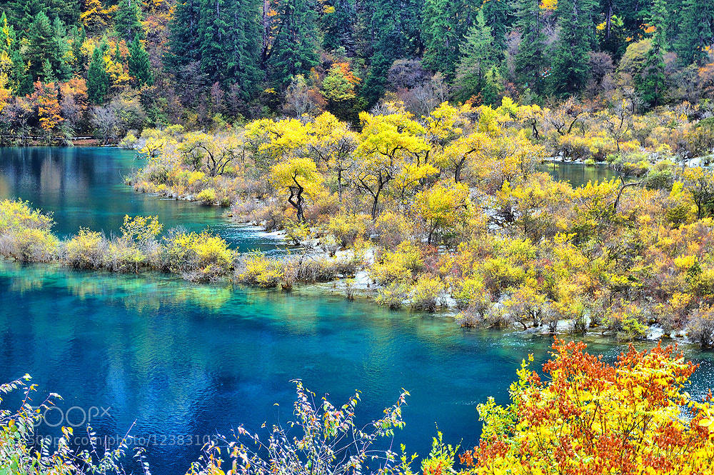 Photograph colorful of autumn # 1 by Jumrus Leartcharoenyong on 500px