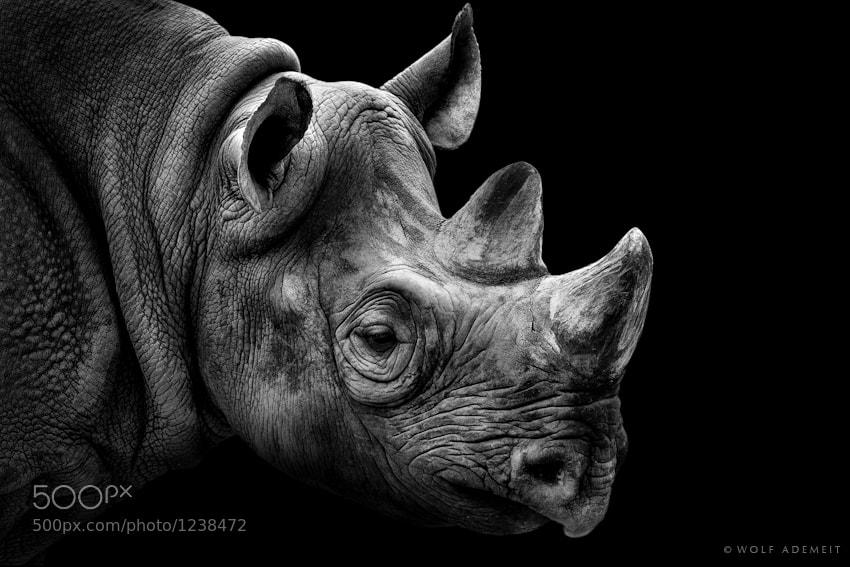 26 rhino