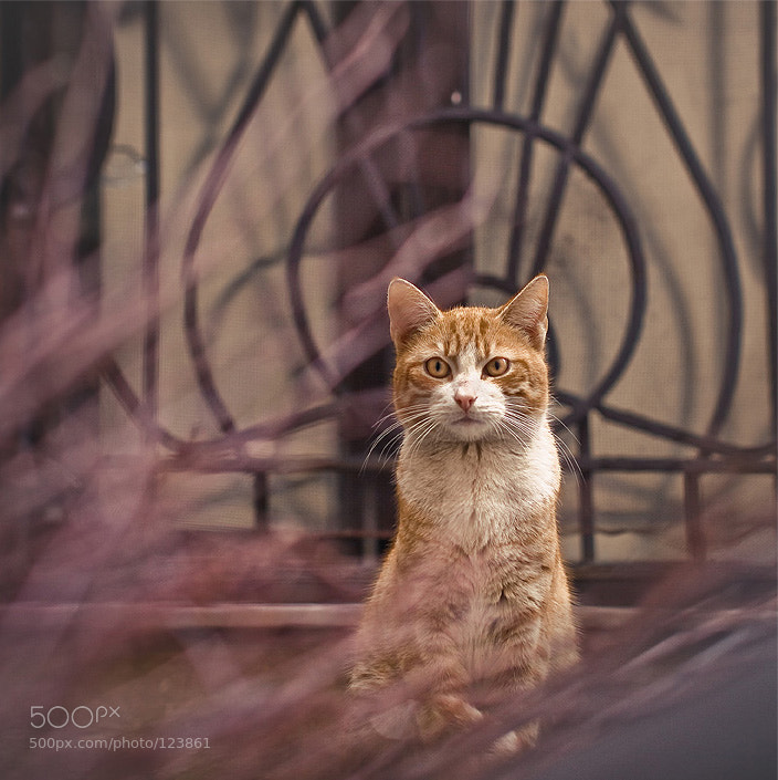 Photograph Red cat by alexander kan on 500px