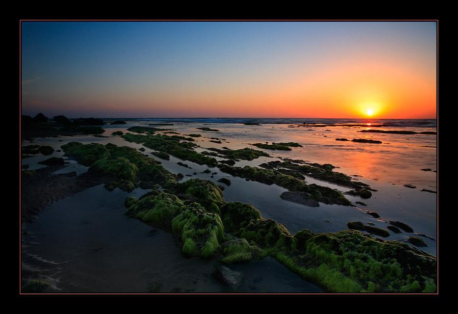 Palmahim beach №4