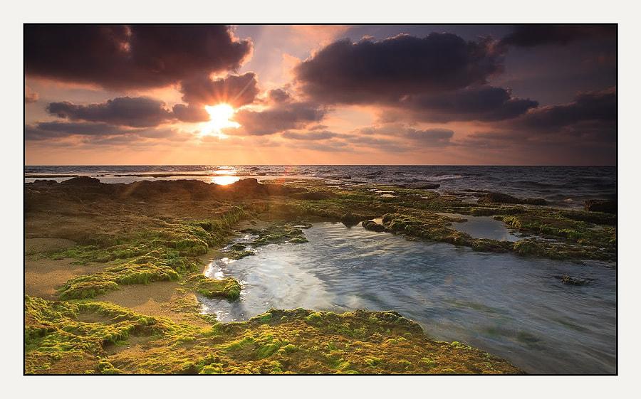 Palmahim beach №5