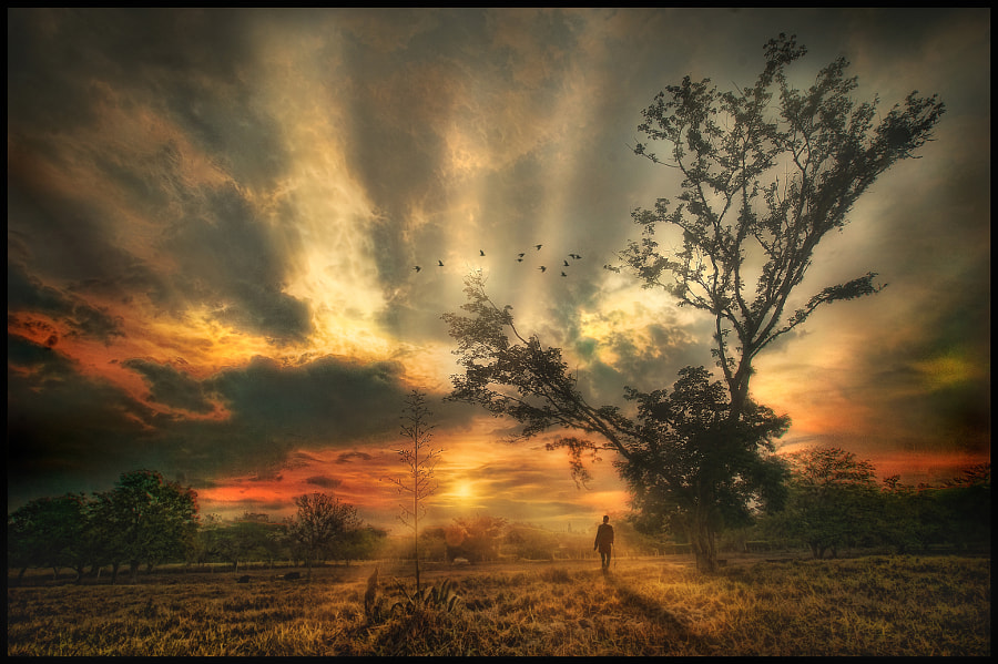 the Observer. by jose arley agudelo