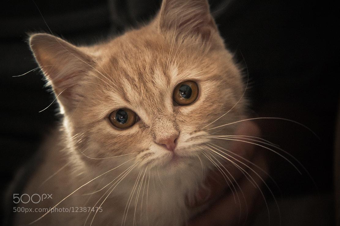 Photograph pussycat by Danechka Christmas on 500px