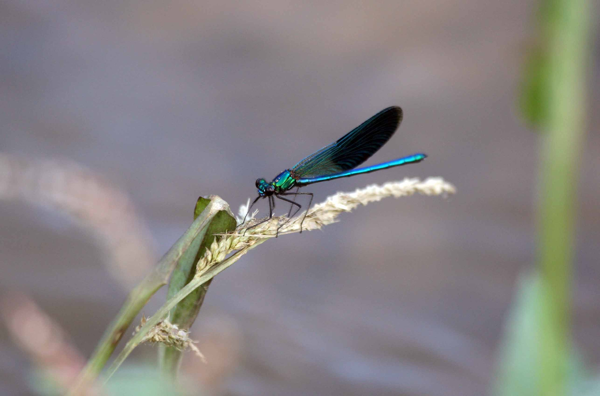 Photograph Dragonfly by Luciano Sollazzi on 500px
