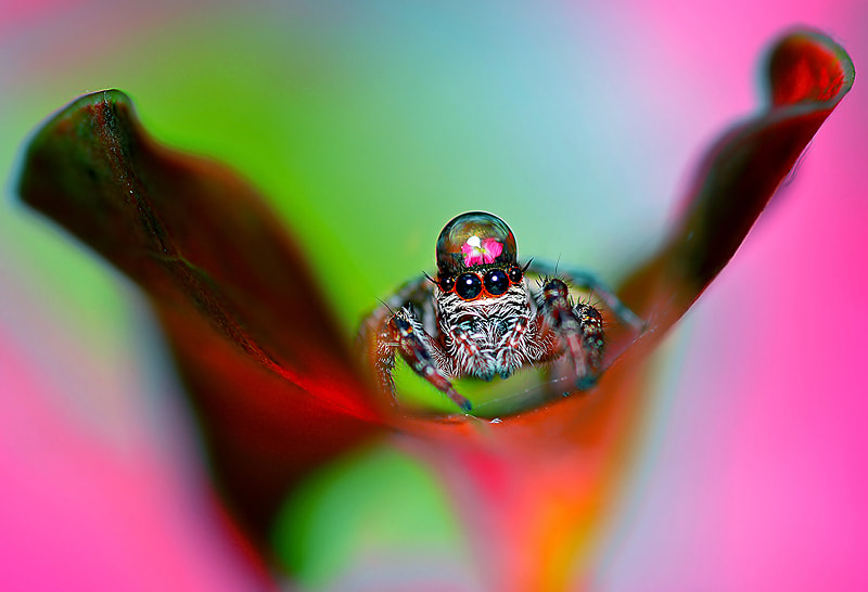 Photograph ...The Spider King... by Bu Balus on 500px