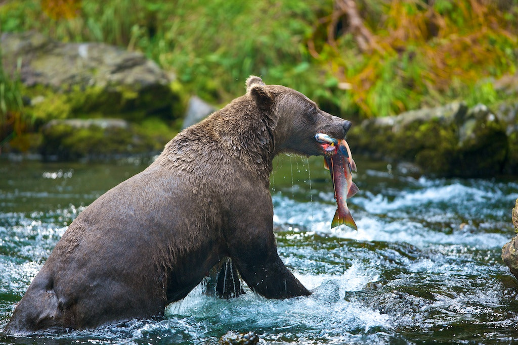 Photograph First Catch by Buck Shreck on 500px