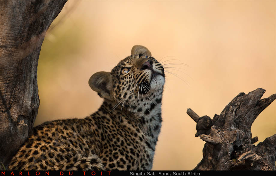Photograph Gazing at falling leaves... by Marlon du Toit on 500px