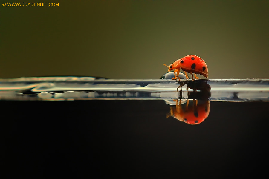 Photograph life is go on by Uda Dennie on 500px