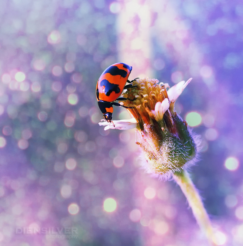 Photograph I love you by Diens Silver on 500px