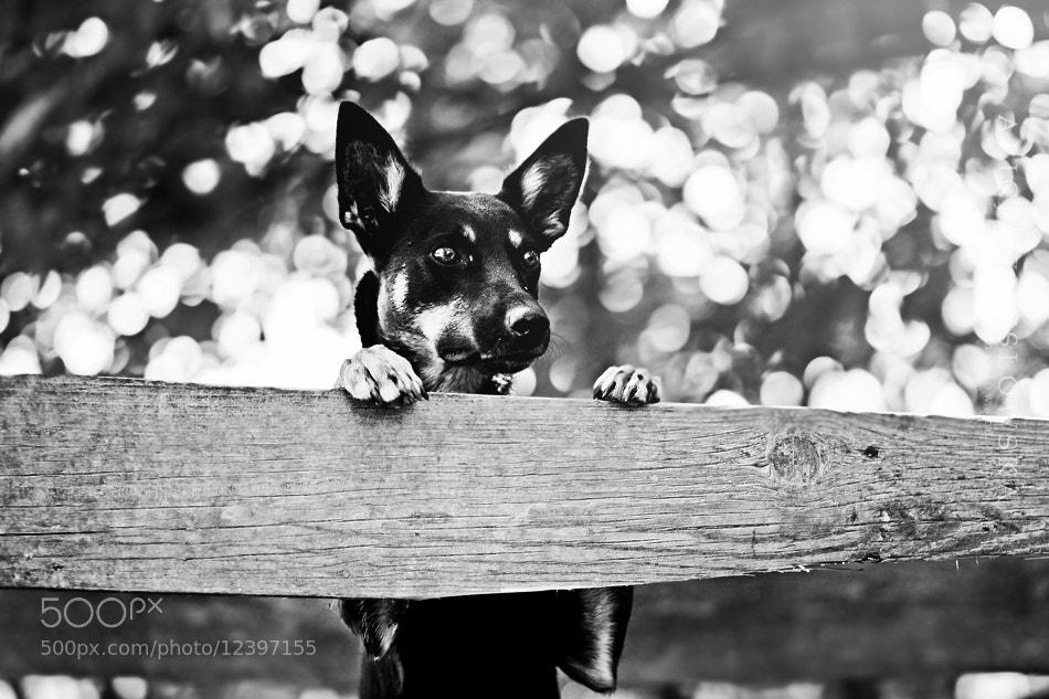 Photograph 29 by Alicja Zmyslowska on 500px