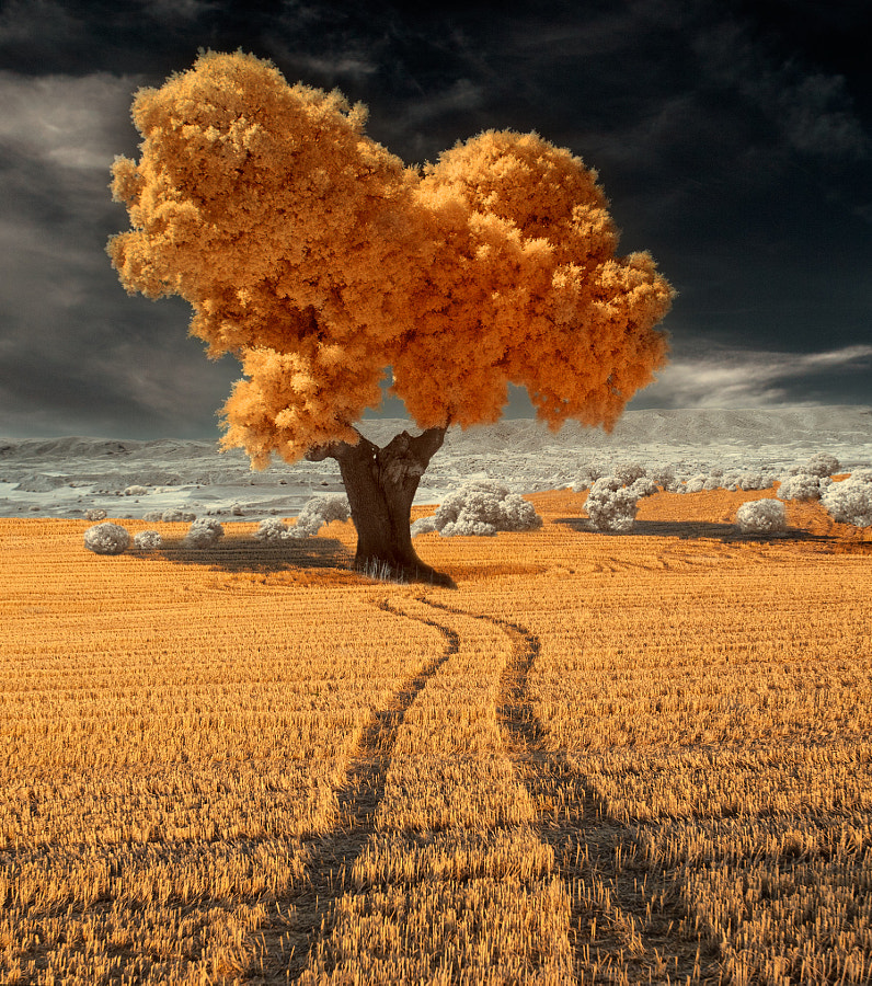 My way by Pedro