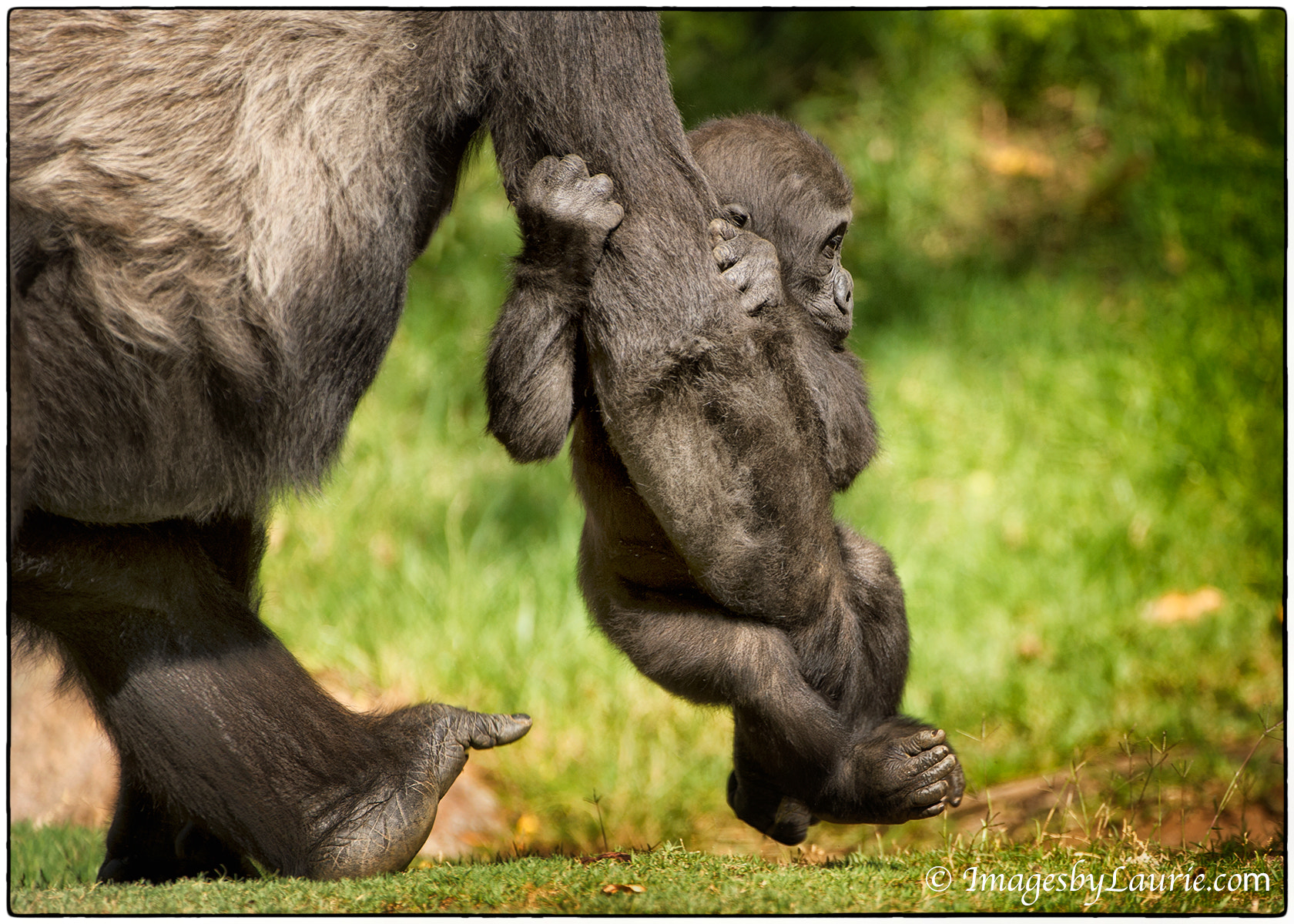Photograph Hold On! by Laurie Rubin on 500px