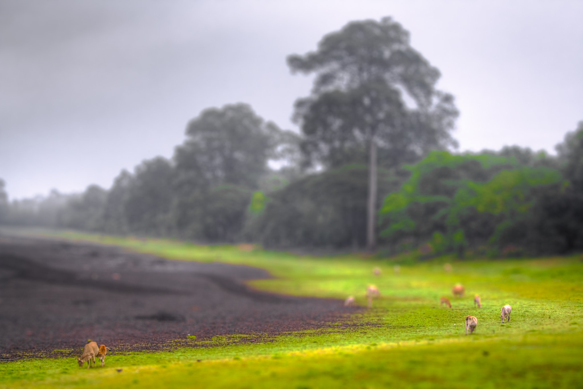 Photograph Tiny Cows by Dan Morris on 500px