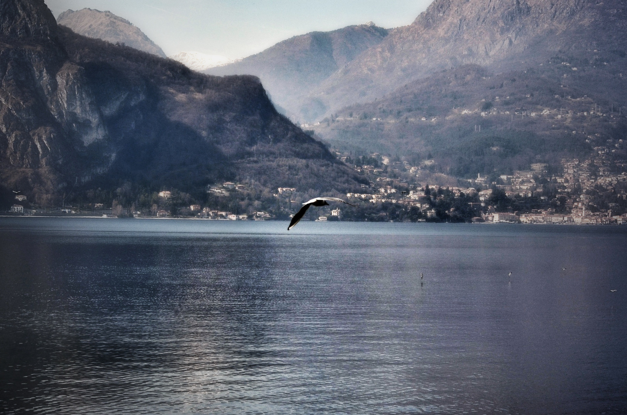 Photograph Fly away by Silvia Peschiera on 500px