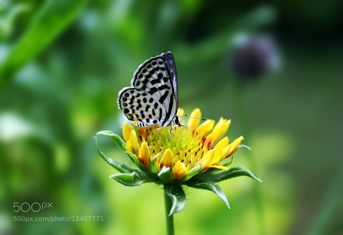 Photograph Butterfly... by Anshul Tiwari on 500px