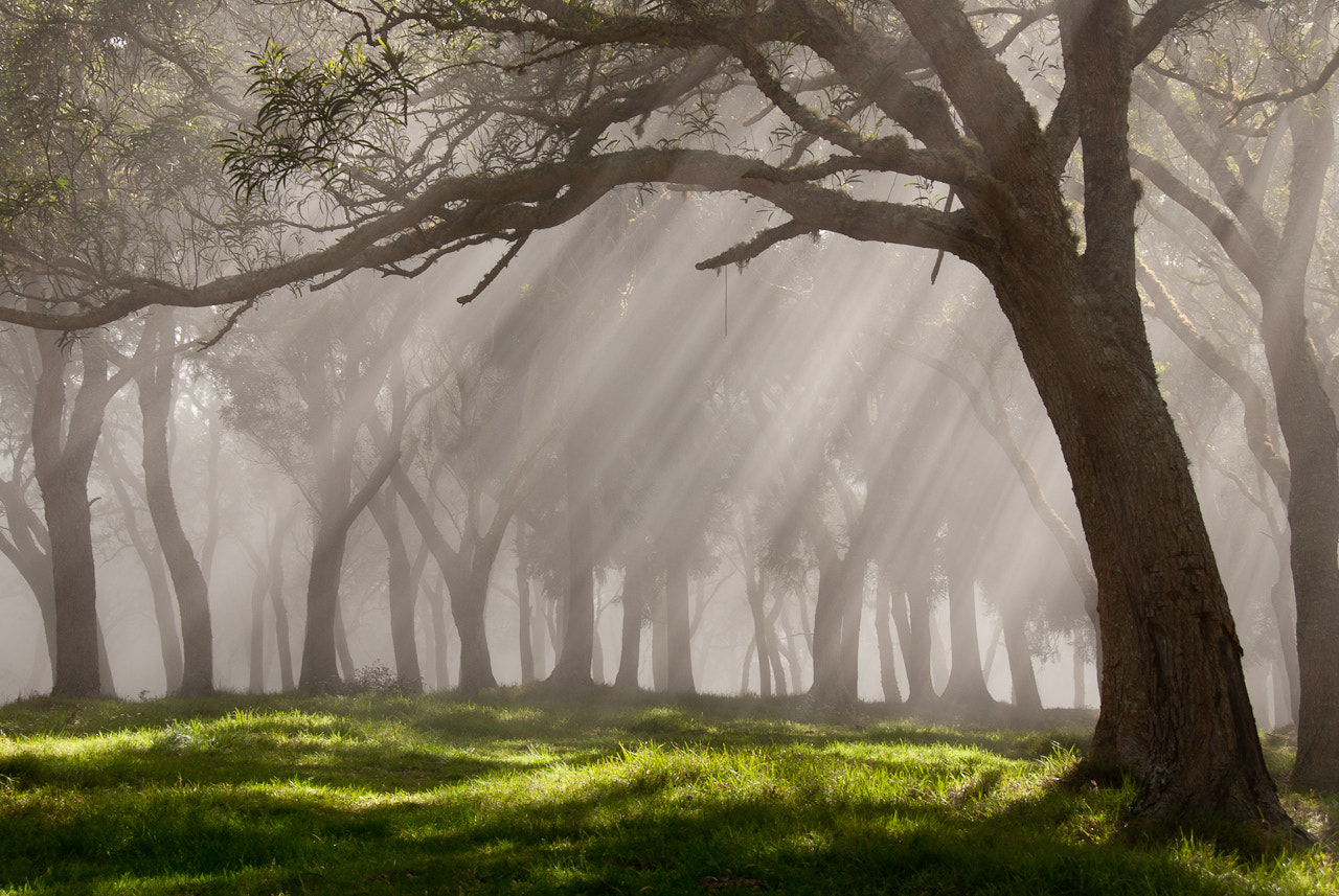 Photograph The Mist by Thomas Bucher on 500px