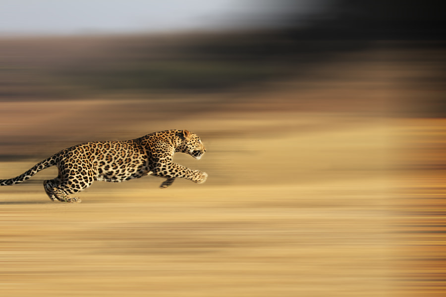 Running for life....... by Suneet Bhardwaj on 500px.com