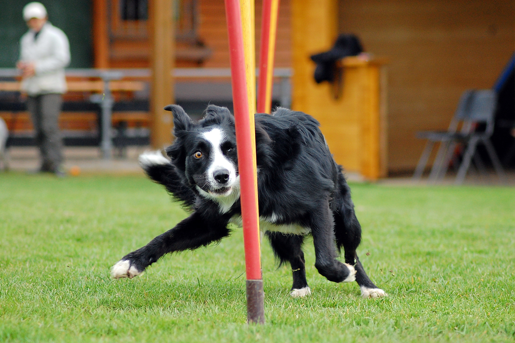 Photograph Agility is fun by Heike Klett on 500px