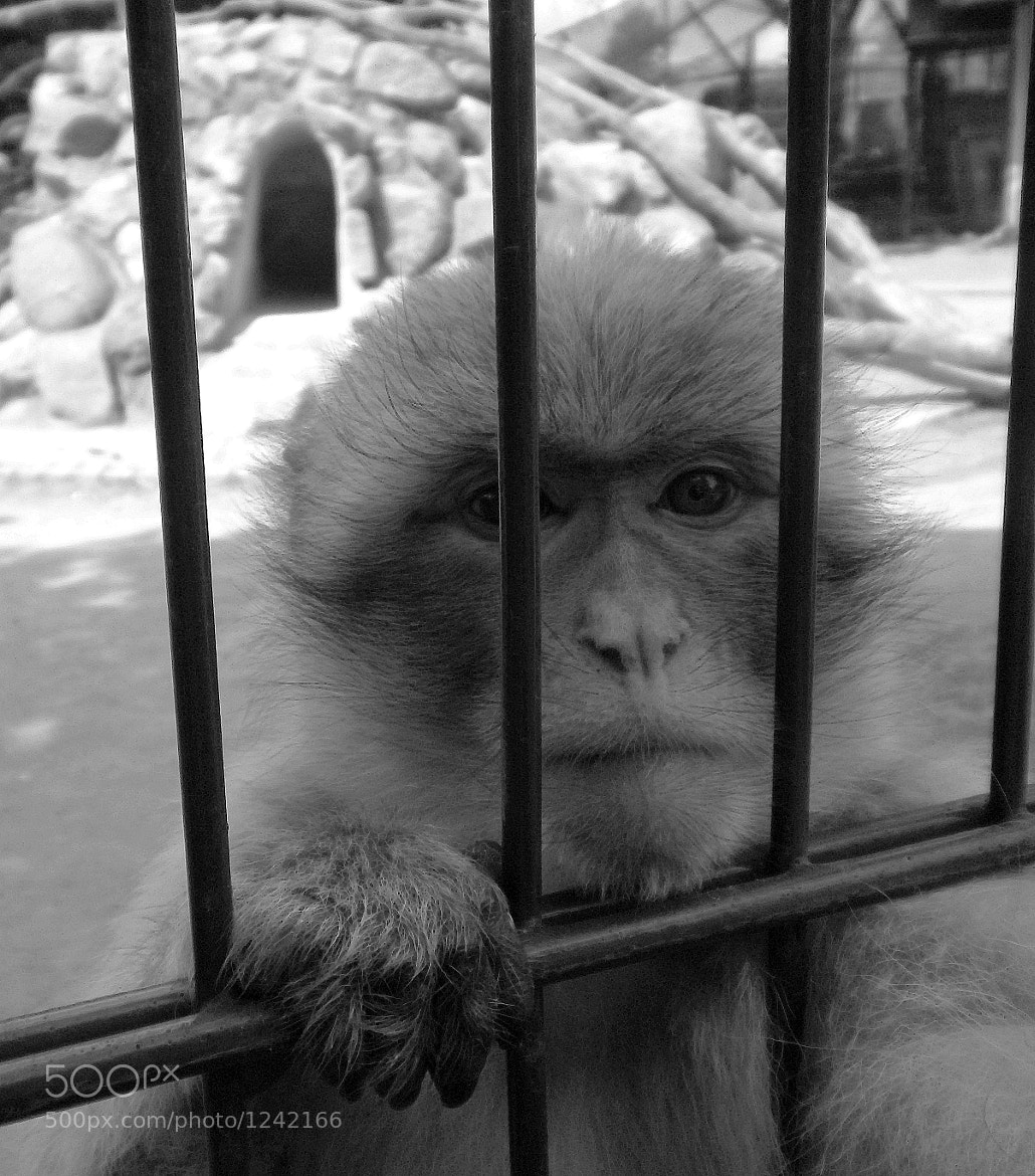 Photograph in captivity V by KingMcBenz . on 500px