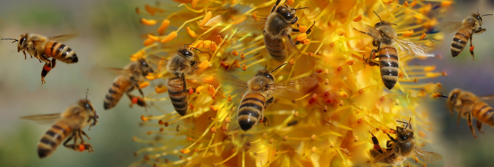 Photograph My Honey Bees by Betsy Seeton on 500px