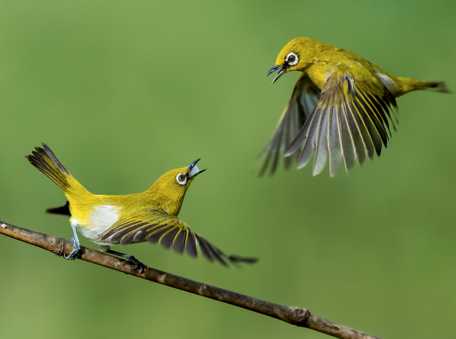 The fight by Nagaraj Chindanur on 500px.com