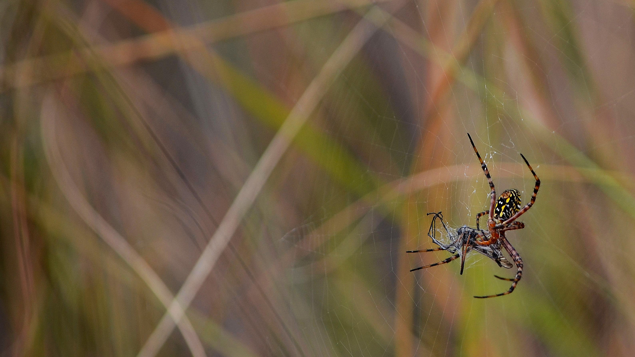 Photograph Along Came a Spider by Glen Hadiardja on 500px