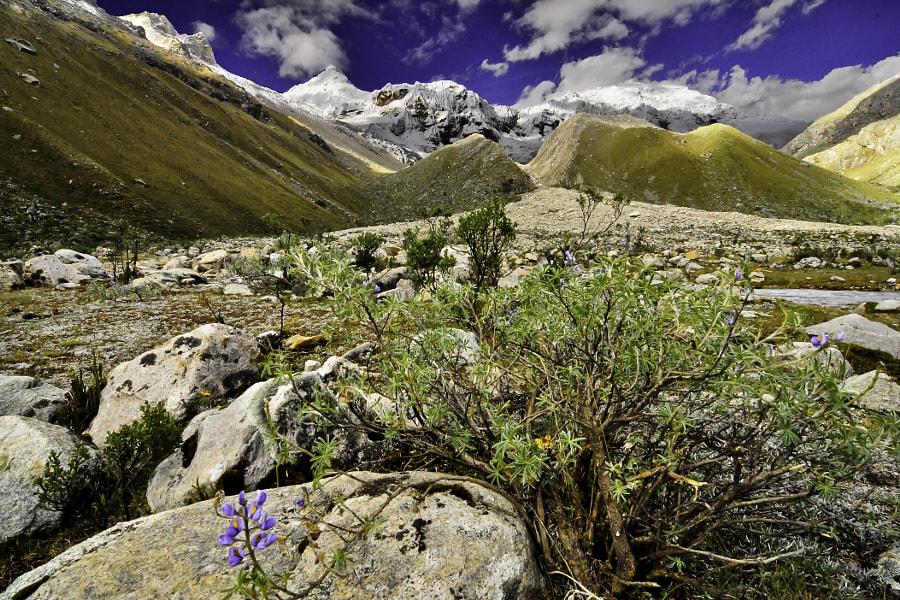 Ishinca, Cordillera Blanca - camping in the high andes
