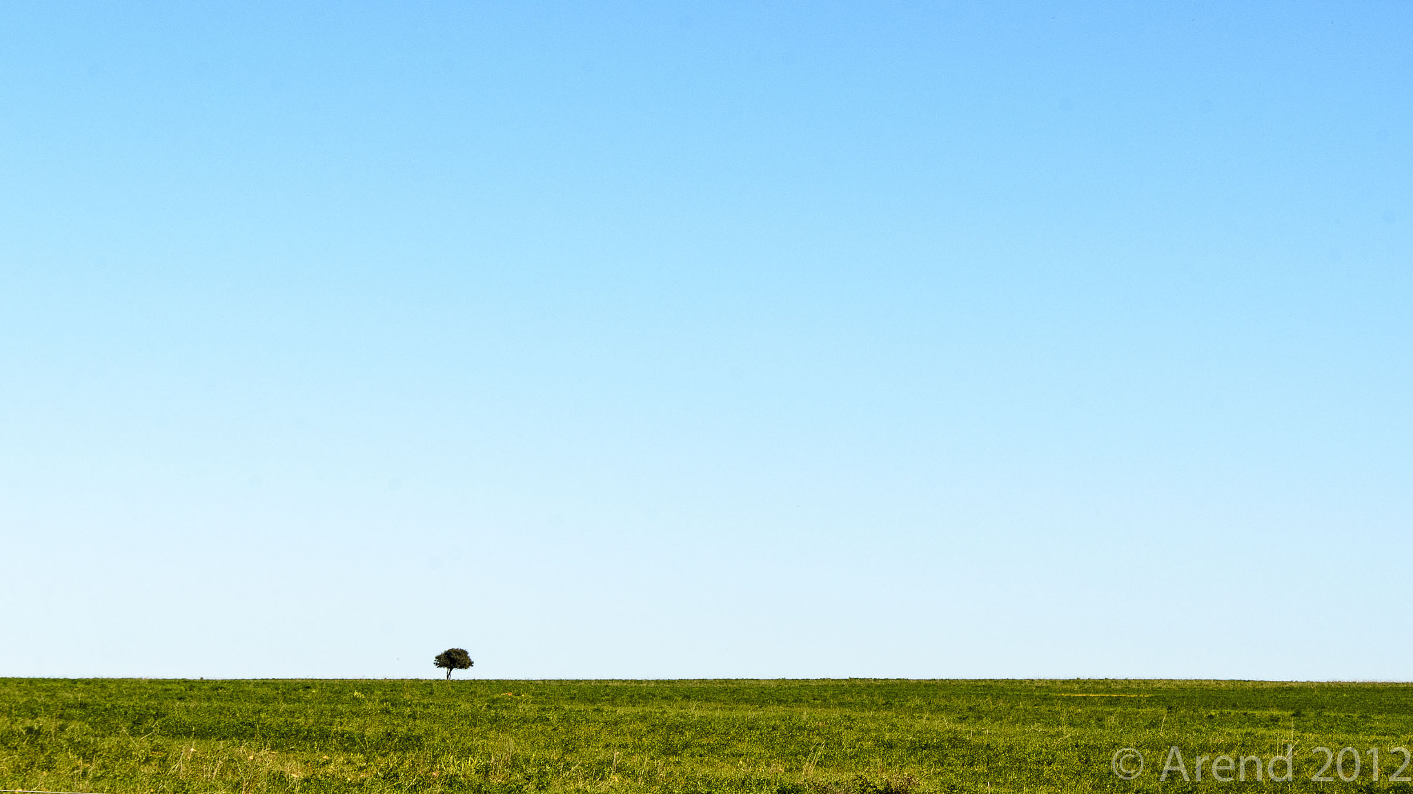 Photograph Lonely Tree by Arend van der Walt on 500px