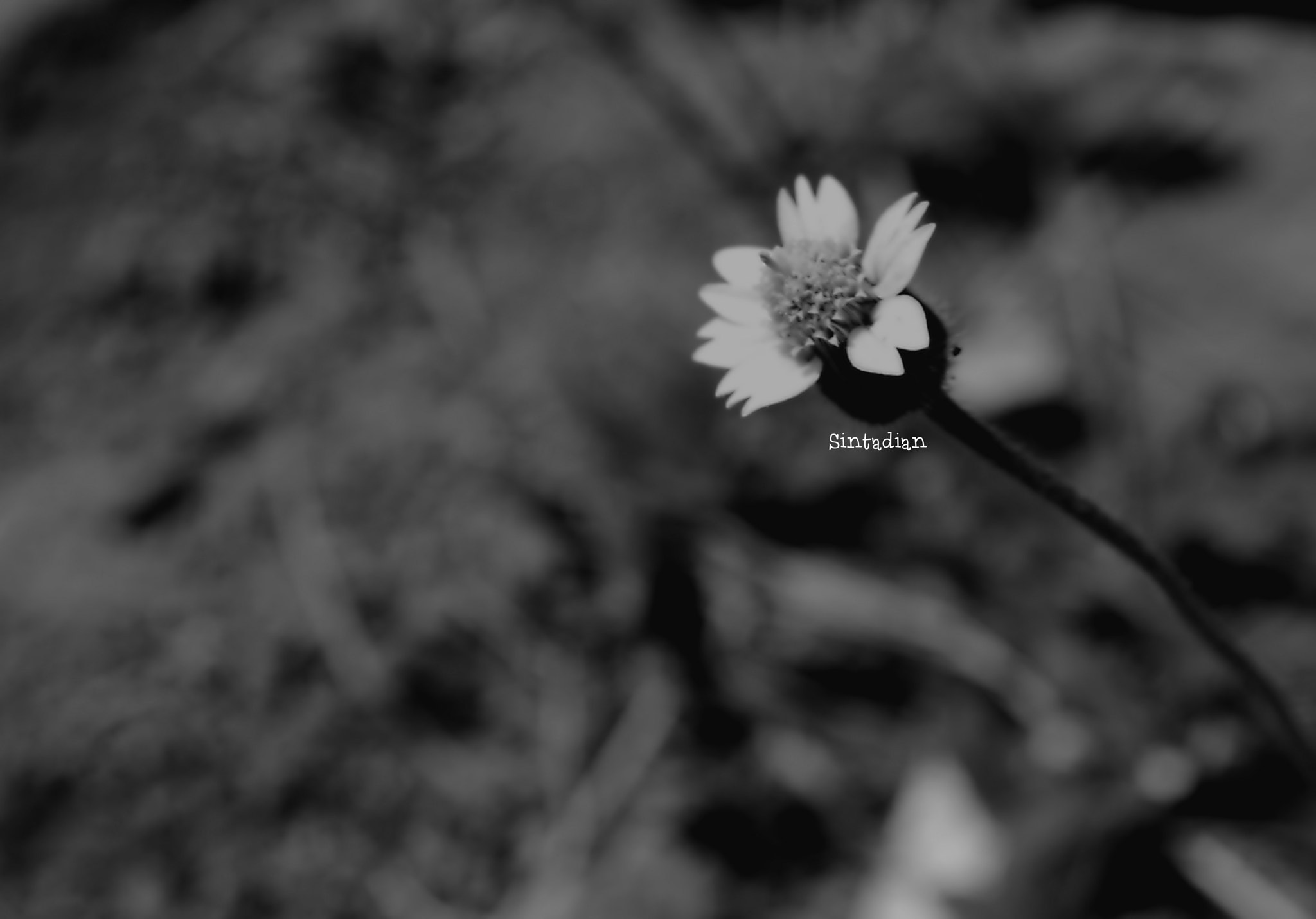 Photograph one lives in the hope of becoming a memory  by Sinta Dian on 500px
