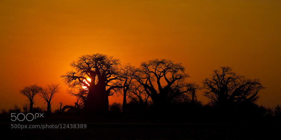Photograph Baobab Sunrise by Mario Moreno on 500px