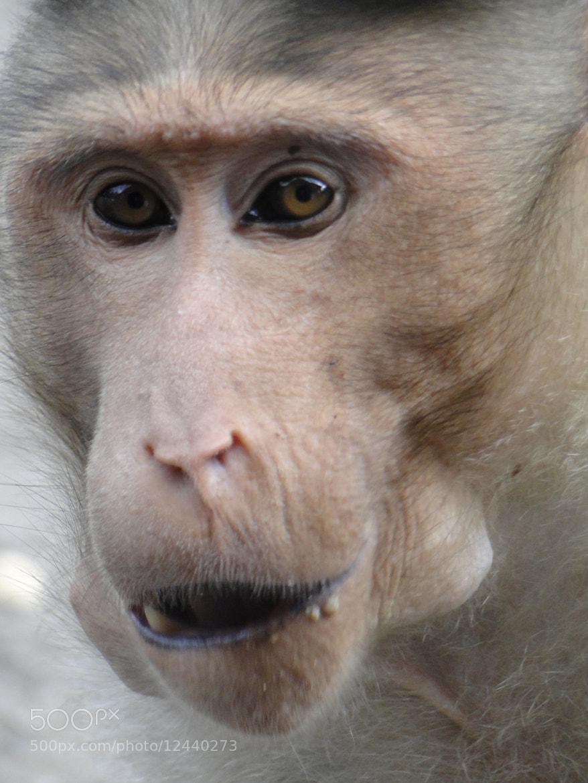 Photograph Portrait of monkey by Lakshmipathi Narayanasamy on 500px