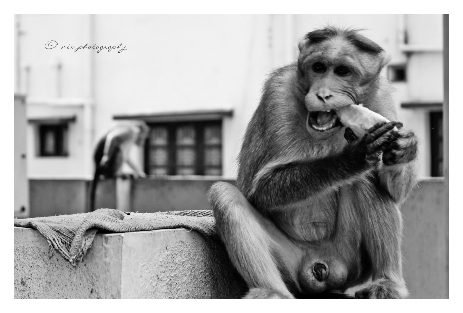 Photograph The Naked Ape by Nithesh Kanth on 500px