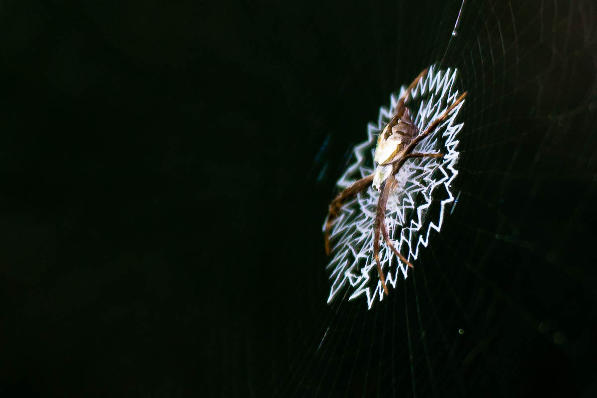 Photograph Itsy Bitsy Spider by George Adams on 500px
