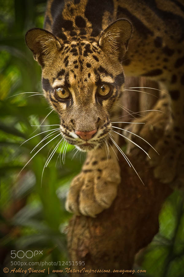 Photograph Jungle Princess by Ashley Vincent on 500px