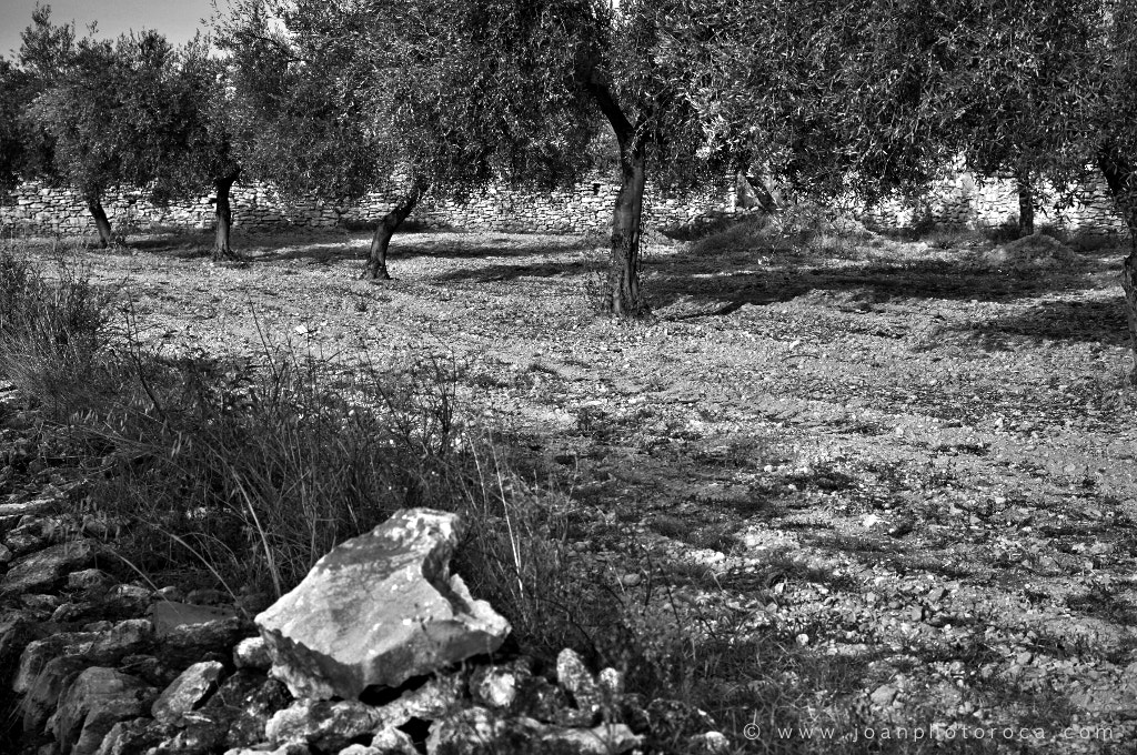 Photograph Oliveres by Joan Roca Febrer on 500px