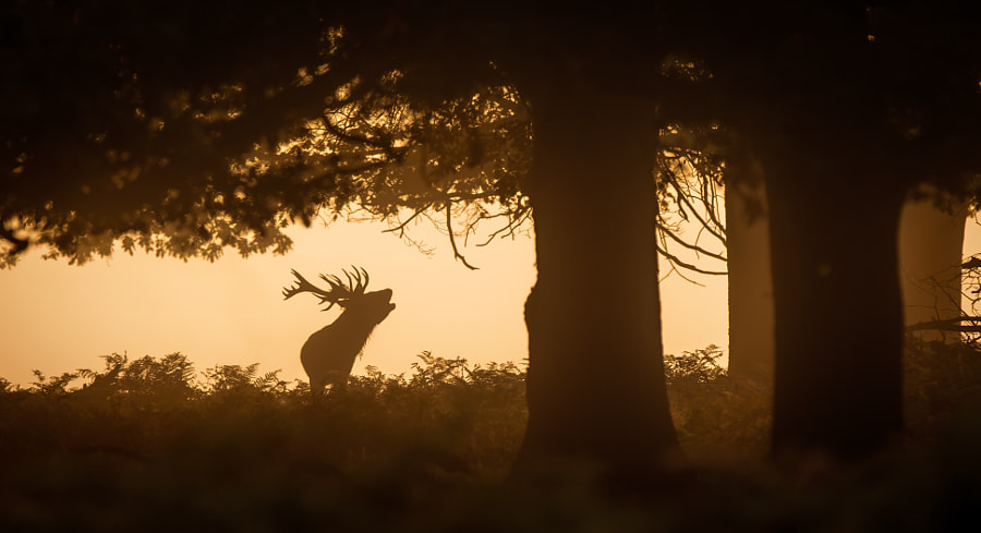 meanwhile deep in the forest... by Mark Bridger on 500px.com