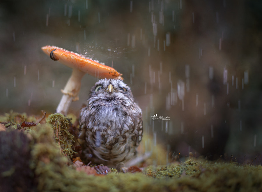 Raindrops by Tanja Brandt on 500px.com