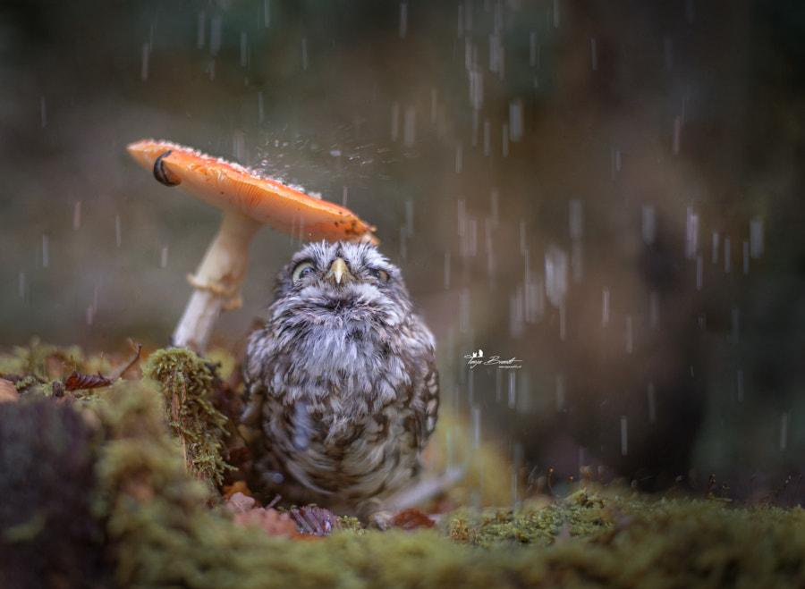 Raindrops by Tanja Brandt on 500px.com