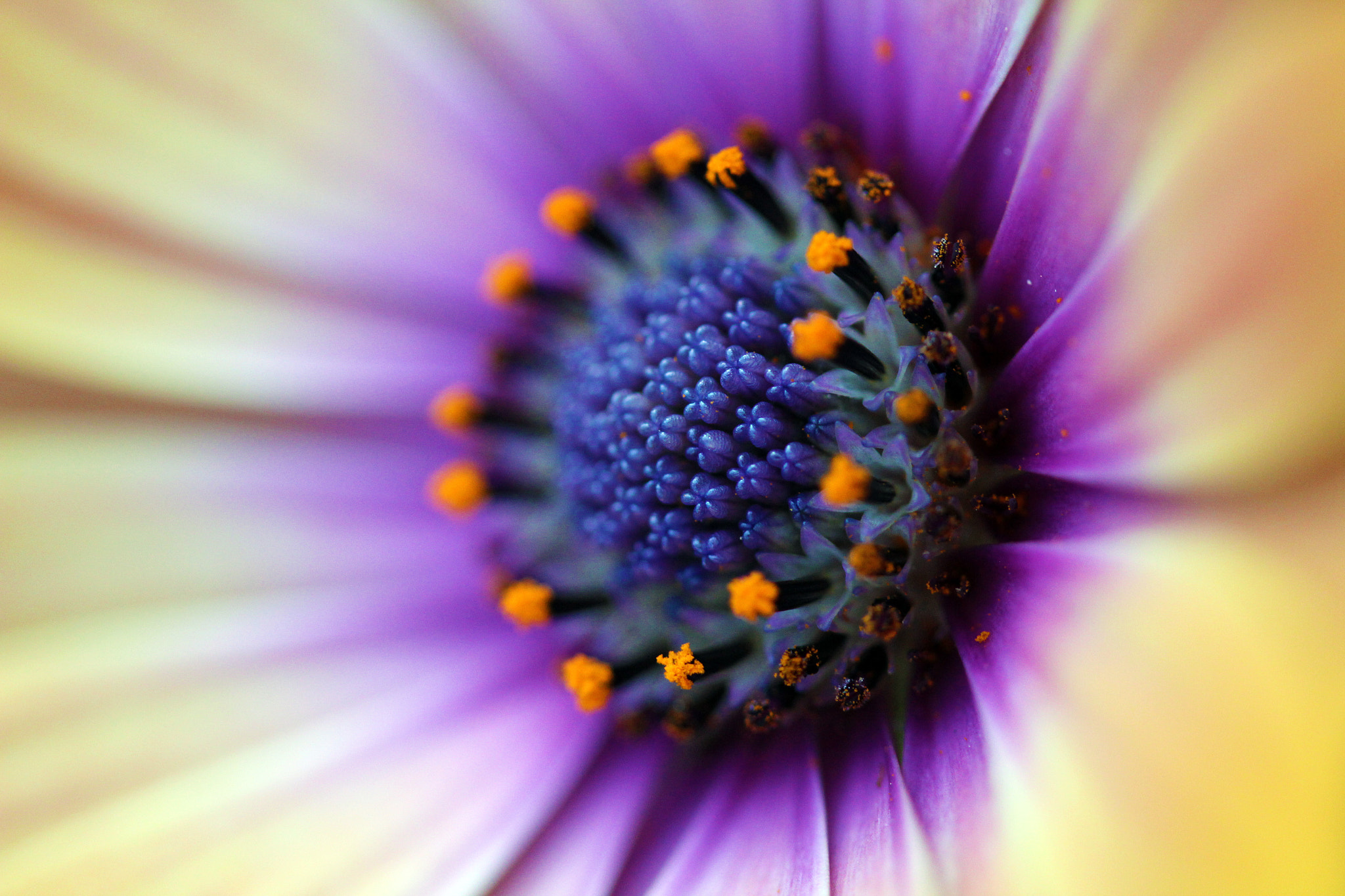 Photograph flower by Irene Soxsmith on 500px