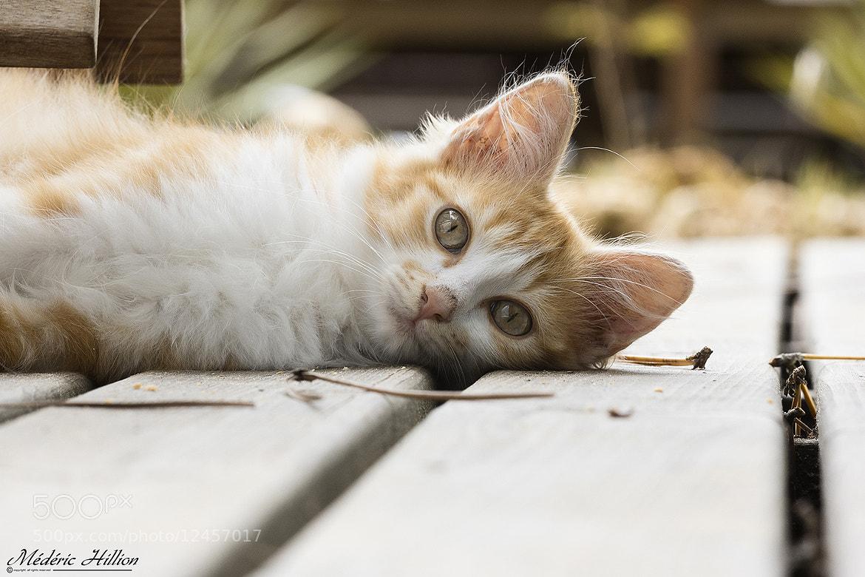 Photograph Have a break, have a Kit Cat !  by Médéric Hillion on 500px